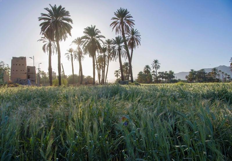 هل يخضع بيع الأراضي الزراعية لـ ضريبة القيمة المضافة ؟