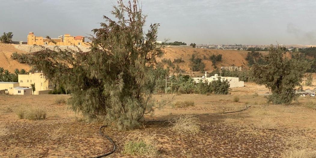 البيئة تكافح أسراب الجراد الصحراوي في 7 مناطق