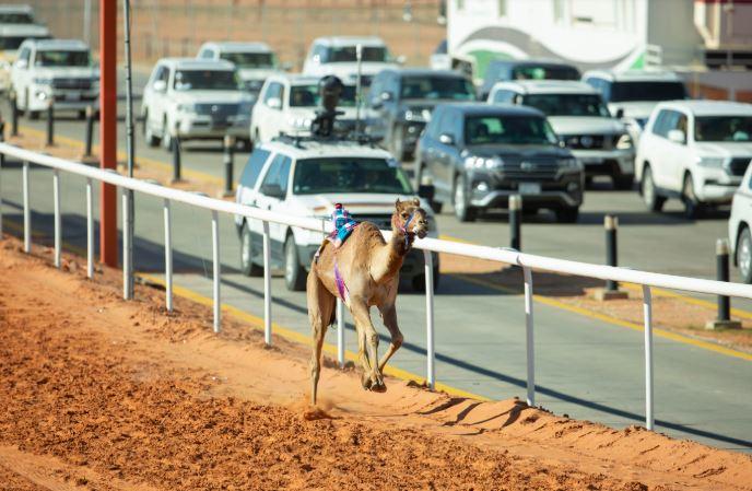 مواطن وابنه يتنافسان في سباقات الهجن - المواطن