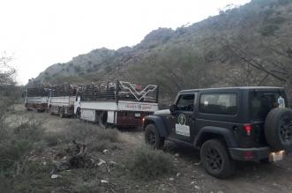 ضبط أربع شاحنات حطب وفحم في عسير - المواطن
