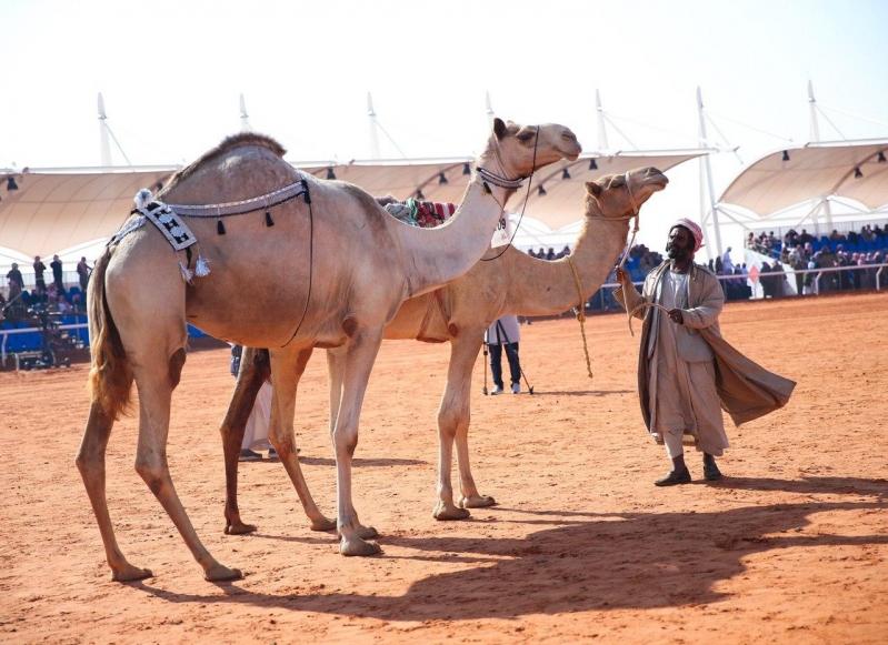 ابن حثلين: آلية جديدة لفحص العبث في مهرجان الإبل
