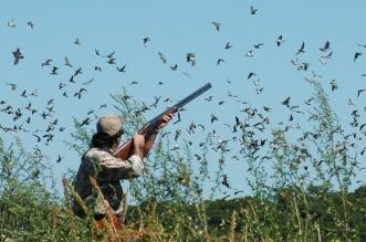 الحياة الفطرية تحذر هواة صيد الحيوانات والطيور البرية - المواطن