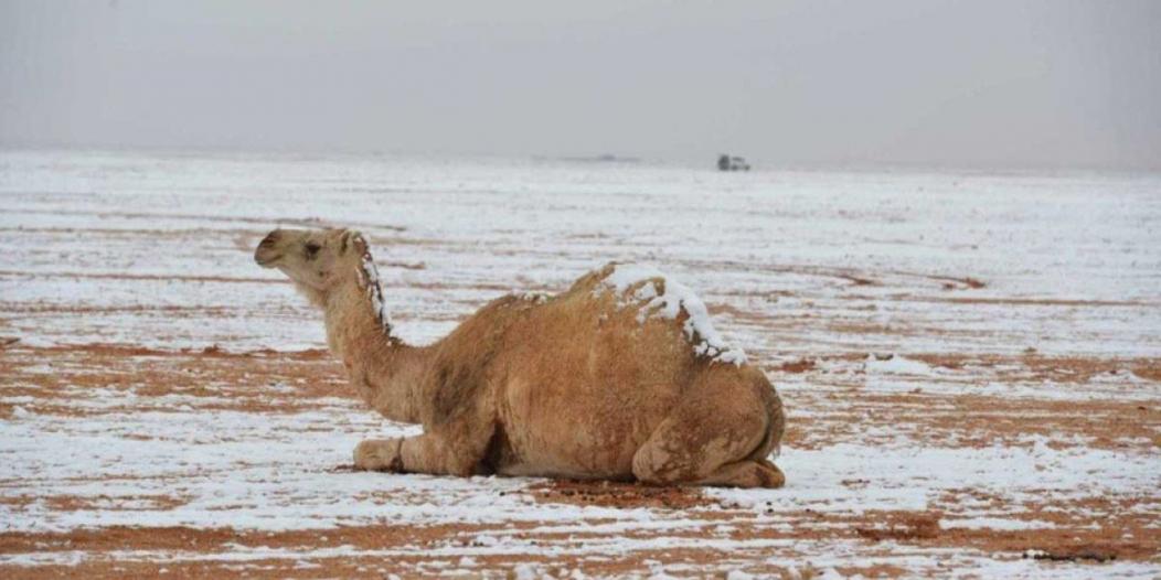 أمطار رعدية وفرص لتساقط الثلوج.. والمدني يحذر الجميع