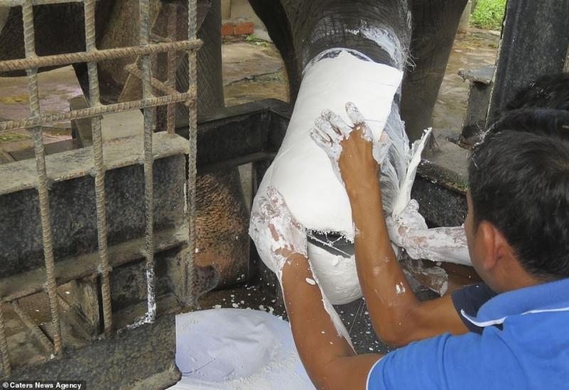 بالصور.. فيل معاق يستمتع بحياته بعد حصوله على أطراف اصطناعية - المواطن