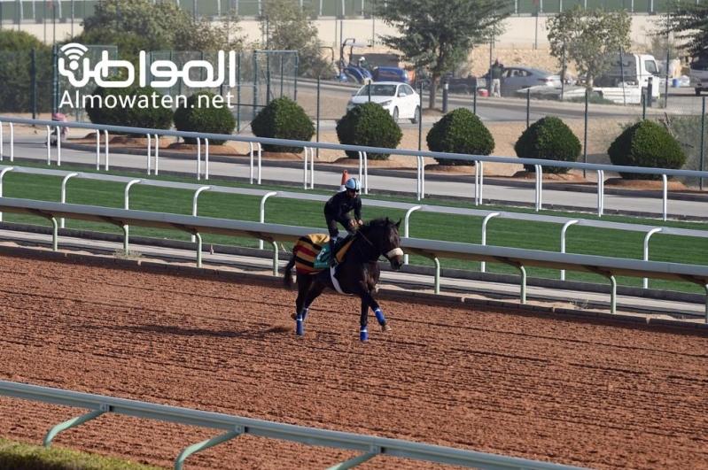صور.. الاستعدادات النهائية لأغلى سباق خيول في العالم