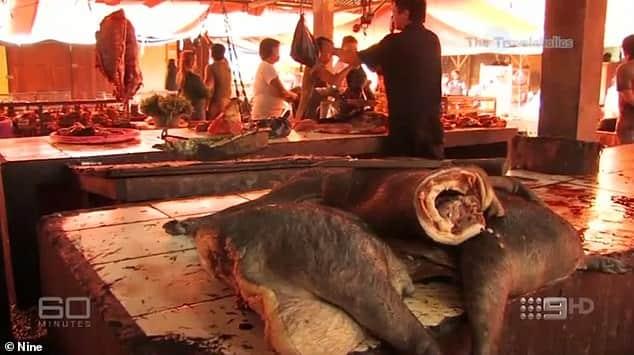 سوق الحيوانات البرية الحية في الصين 4