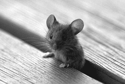 فيديو مرعب.. الأرض تنشق وتبتلع رجلًا والفئران تحاصره