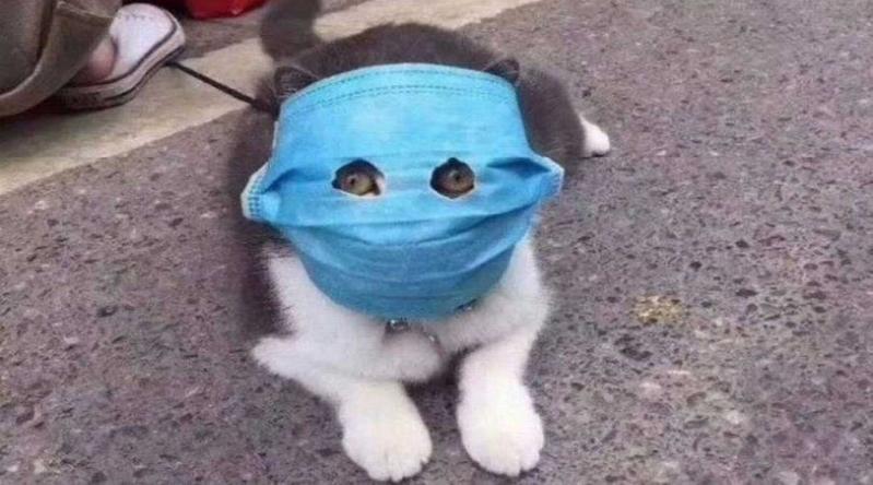 قط وكلبان حصيلة فيروس كورونا بين الحيوانات حتى الآن