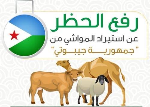 رفع الحظر عن استيراد المواشي من جيبوتي