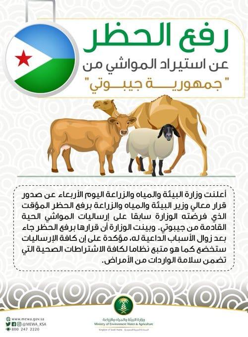 رفع الحظر عن استيراد المواشي من جيبوتي - المواطن