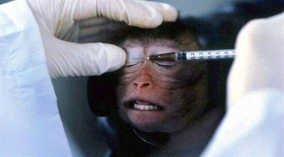 تعرف على الفرق بين فئران وقرود التجارب