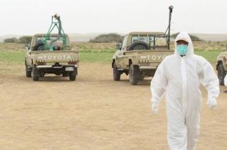 البيئة: حالة الجراد الصحراوي بالمملكة تحت السيطرة - المواطن