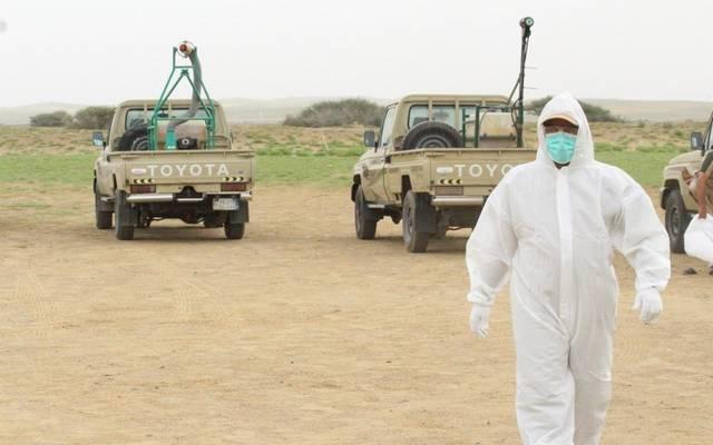 البيئة: حالة الجراد الصحراوي بالمملكة تحت السيطرة