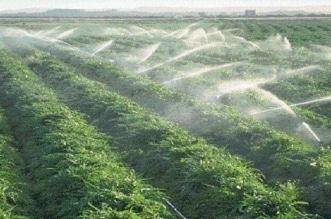 البيئة تطرح 15 ألف قطعة أرض وقف زراعية للاستثمار - المواطن