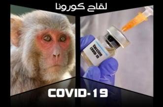 دراسات واعدة.. الإصابة بكورونا تمنح الحصانة من الفيروس - المواطن