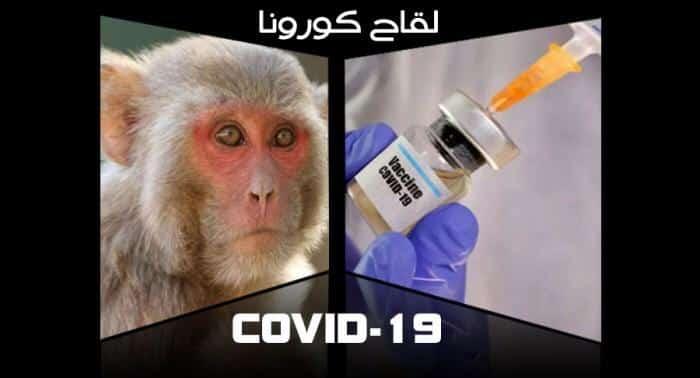 دراسات واعدة.. الإصابة بكورونا تمنح الحصانة من الفيروس