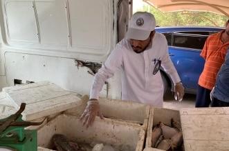 ضبط 60 كيلو أسماك فاسدة مع بائع متجول في بارق - المواطن