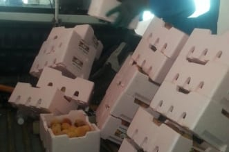 مصادرة 150 صندوق فاكهة تالفة في نطاق الشرفية - المواطن