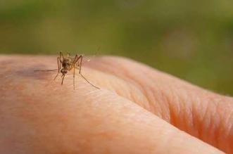 بحث جديد يكشف دور البعوض في عدوى كورونا - المواطن
