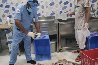 250 كيلو أسماك فاسدة في مطعم بجدة! - المواطن