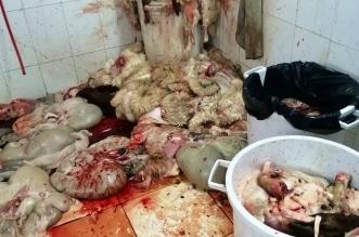 مصادرة وإتلاف 43 رأس أغنام مذبوحة في العزيزية - المواطن
