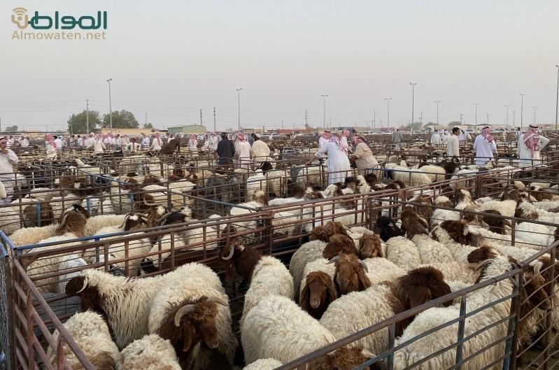 فيديو للشيخ سعود الشريم: 3 شروط للأضحية