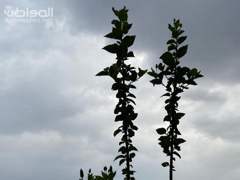 أمطار الفجر على أبها وخميس مشيط وأحد رفيدة