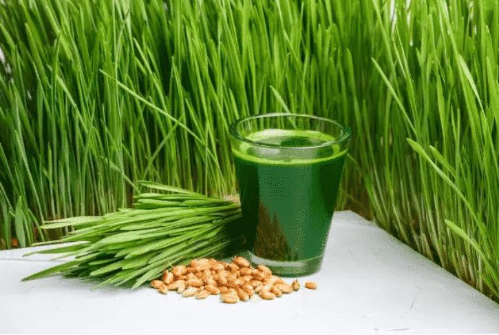 7 أعشاب رائعة لمرضى السكري - المواطن