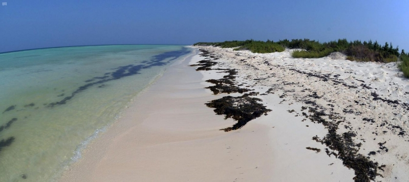 من الوجهات السياحية بالمملكة... جزر تتوسد البحر الأحمر بطبيعتها البكر - المواطن