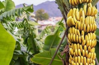 فوائد غير متوقعة لـ قشر الموز !
