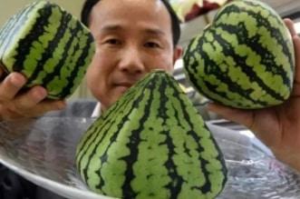 البطيخ الياباني