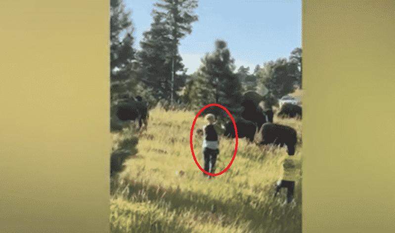 فيديو.. سيلفي مع ثور هائج كاد يكلف امرأة خمسينية حياتها