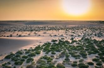 هكذا تلتزم السعودية بمستقبل جديد صديق للبيئة ضمن رؤية 2030