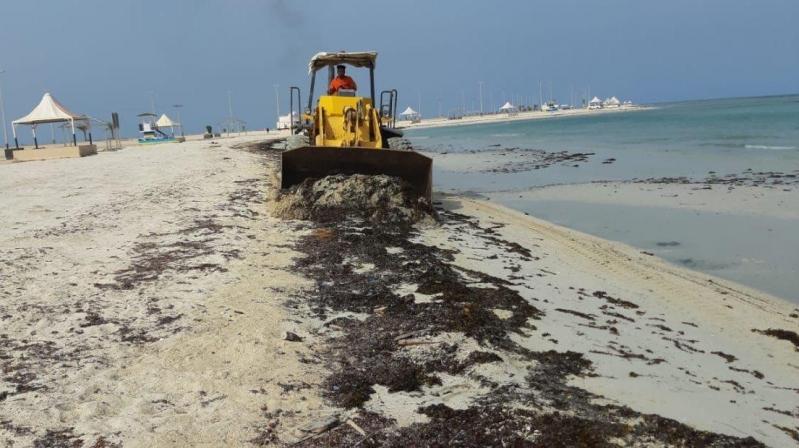 شاهد.. حملة لتنظيف الشواطئ والحدائق العامة في البرك