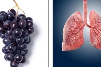 10 فواكه وخضروات تشبه أجهزة جسم الإنسان تعرّف عليها - المواطن