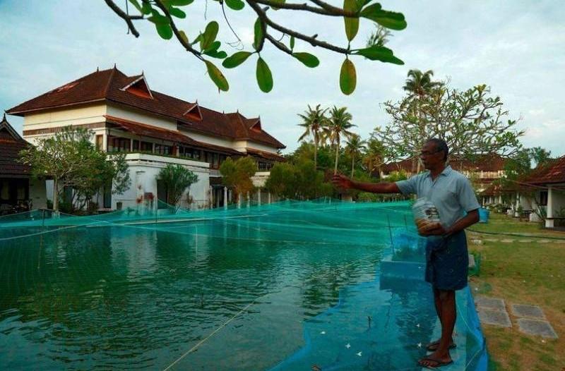 فندق 5 ستارز يحوّل مسبحه إلى مزرعة أسماك بسبب كورونا