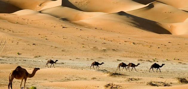 بحث عن خصائص البيئة الصحراوية للصف السادس الابتدائي