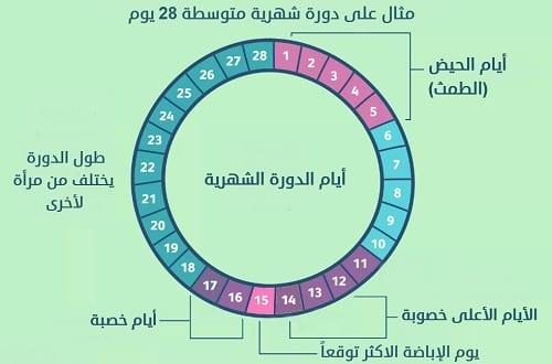 جدول ايام التبويض بعد الدورة وكيفية حساب فترة التبويض