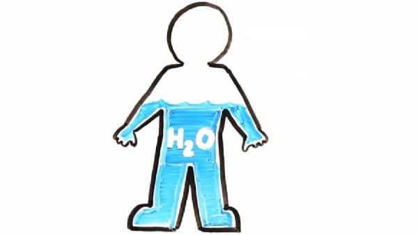 كم نسبة الماء في جسم الإنسان وما وظيفتها