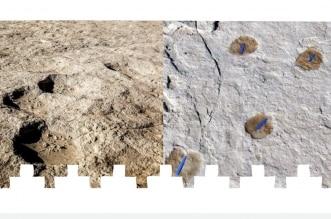 الاكتشافات الأثرية الجديدة في المملكة.. إنجازات معرفية ومكتسبات وطنية - المواطن