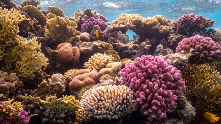 Blooloop مشروع البحر الأحمر عمل خيالي على أرض الواقع