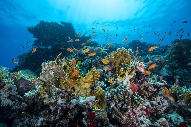 مشروع البحر الأحمر ..خيال على أرض الواقع - المواطن