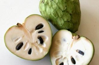 لماذا يُنصح الحوامل بتناول فاكهة القشطة ؟ - المواطن