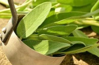علاج نقص فيتامين د بالاعشاب