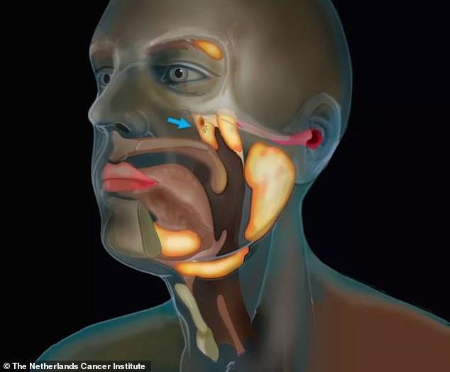 ما هي وظيفة العضو المكتشف حديثًا في جسم الإنسان؟