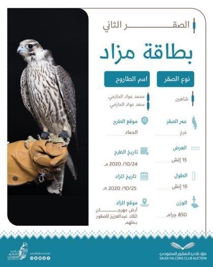 مزاد نادي الصقور السعودي