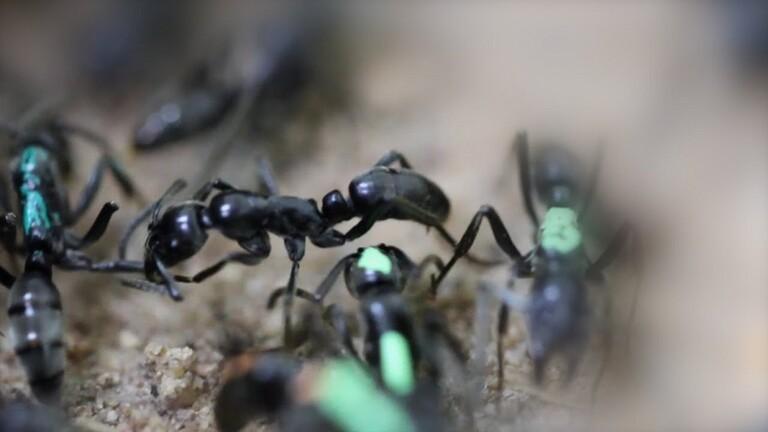 ترك مهنته وفتح متجرًا لبيع النمل!