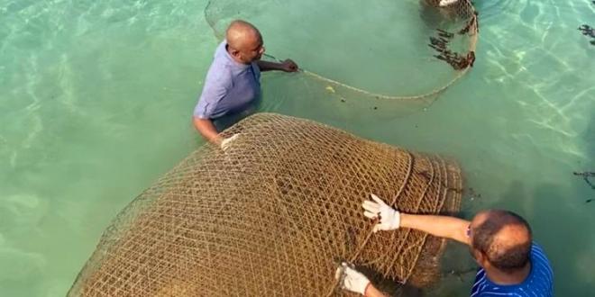 صورة شاهد.. ضبط 40 قرقور صيد مخالفاً في القنفذة