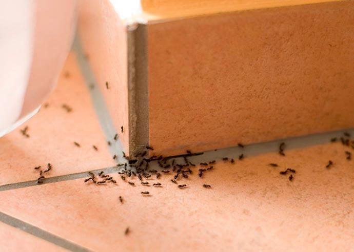 ما هي أسباب كثرة النمل في البيت وما هي طرق العلاج