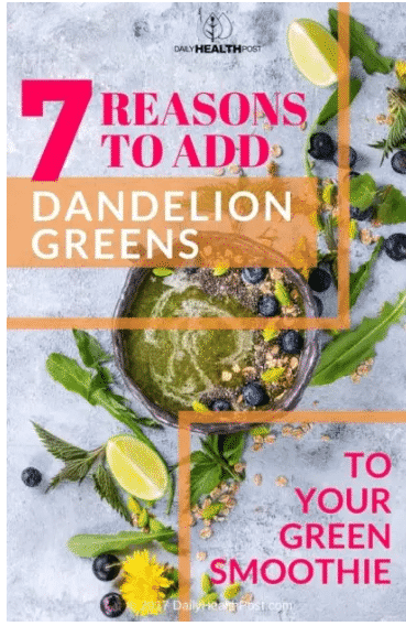 7 فوائد لا تعلمها عن نبات الهندباء الأخضر